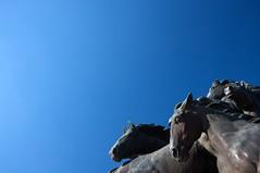 horsies (xgray) Tags: blue light summer sky horses sculpture sun statue digital canon austin eos university texas wideangle universityoftexas horsey horsies mustangs efs1022mmf3545usm 40d postedtophotographersonlj xgv08