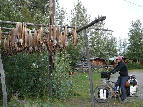 Pescados secandose al sol para alimentar a los Huskys en invierno