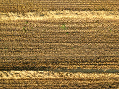 Wheat Field (stephanie.keating) Tags: field lines flying wheat aerialview fromabove rows hotairballoon lookingdown tilled viewfromabove wheatfield airballoon balloonride inthesky