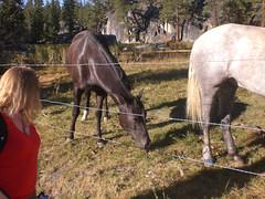 Sue and  the Horses (mark_hayes_ca) Tags: camping anseladamswilderness southfork monohotsprings sanjoachinriver