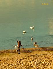 the girl at the lake (dakota harris) Tags: lake beach girl photoshop geese swans vanagram