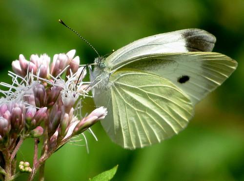 butterflies' paradise ...
