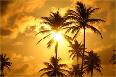 Atardecer en Costa do Saupe (Facu551) Tags: sunset brasil contraluz atardecer bahia salvador palmera costadosaupe caribe naturesfinest theunforgettablepictures overtheexcellence a3b goldstaraward