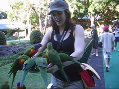 Mostly Lisa & the Rainbow Lorikeets (Lisa Bettany {Mostly Lisa}) Tags: birds video feeding attack australia rainbowlorikeets currumbin goldcoast currumbinwildlifesanctuary mostlylisa