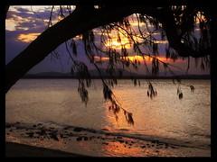Golden view (Porchina) Tags: trees beach sunsets whitsundays mackay tropics sonycybershot northqueensland sladepoint sonydigitaldsct70