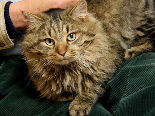 Magnus, at the vet