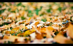 Jan 09 (isayx3) Tags: autumn winter leaves 50mm nikon dof bokeh 18 fifty nifty d40 50mmf18af thechallengefactory plainjoestudios