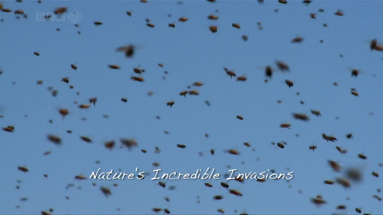 Swarm, Nature's Incredible Invasions   Part 1   When Worlds Collide (4th January 2009) [HDTV 720p (x preview 10