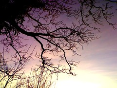 branches (\/\/ander) Tags: blue winter sunset sky sun cold tree countryside sticks purple branches icy twigs skeletal