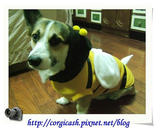我是最可愛的bee