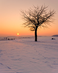 It's cold outside (Philipp Klinger Photography) Tags: winter sunset sky orange sun snow cold tree silhouette germany deutschland nikon europe hessen bad trails explore gradient philipp hesse nauheim klinger wetterau tamron2875mmf28 supershot 11c abigfave d700 dcdead saariysqualitypictures