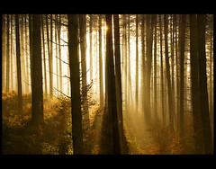 Farantir (♥ Damona-Art •.¸¸.•´¯`•.♥.•´¯`) Tags: life morning autumn trees light nature forest photography landscapes frames lightandshadows woods nikon heaven raw shadows seasons belgium secret mystical sunrays forests mystic sunbeams naturewatcher thesecretlifeoftrees zauberwelt farantir