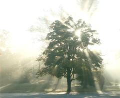 Morning Sun Burst (Stanley Zimny (Thank You for 14 Million views)) Tags: park morning autumn trees light sun fall nature sunrise seasons nj burst ringwood 30faves30comments300views