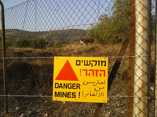 Golan Heights Cows in the Mine Fields by Randall Niles.