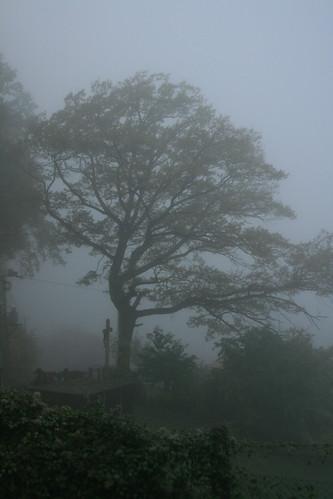 A foggy morning at Nové Hrady
