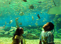 Wonder (Inkblots) Tags: ocean life sea portrait people nature wonder aquarium child philippines olympus explore manila awe scenes zuiko floraandfauna myfaves metromanila explored filipinochild olympuse510 dingfuellos thefilipinochild manilaoceanpark larawangpinoy wowpilipinas inkblots