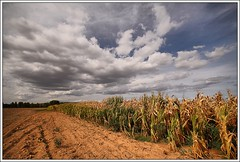 Clouds on a field of corn