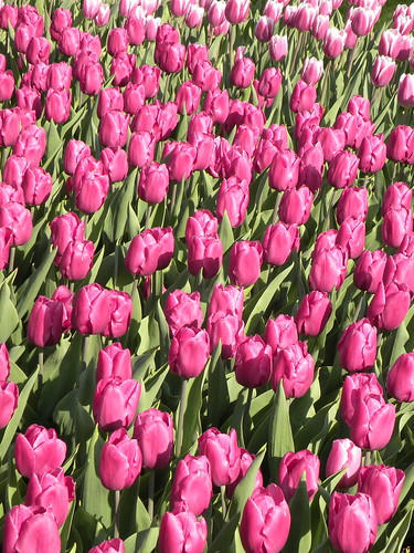 Visit: Longwood Gardens blog image 3