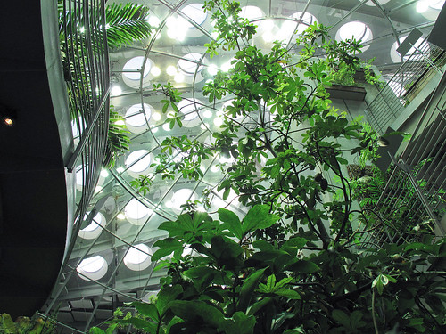 looking up in the rainforest