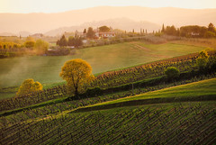 Italy - Tuscanny: Tuscan Vinyards (John & Tina Reid) Tags: italy idealic travelphotography johnreid tuscanvinyard pastoralscene tinareid wwwnomadicvisioncom ruraltuscanny tuscanfarms mistintuscanny