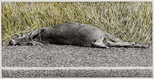 Cindy Wright, Roadkill, 2009