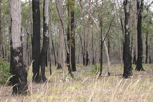 Aussie forest near Sale, VIC.