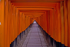 Every gate open to a gate (aurelio.asiain) Tags: door red orange black japan rouge rojo kyoto shrine gates infinity border pass tunnel explore queue sacred gods series ritual vermell passage tori shinto kansai rite foxes limit sanctuary passingthrough frontier vermillion endless photooftheday   divinities unending  aurelioasiain aplusphoto ionushi eliteimages margendelyodo fushimiinarytaisha succesion  highestposition38onfridaymarch142008 22march2008 milvistas
