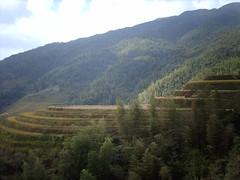 Longsheng  (Rincewind42) Tags: china guilin  riceterrace longsheng  guanxi dragonback