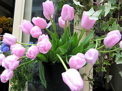Pink Tulip (SmALl CloUd ...) Tags: pink blue flower building green leave beautiful yellow japan tokyo spring pretty hills tulip  aoyama favourite 2008 omotensando