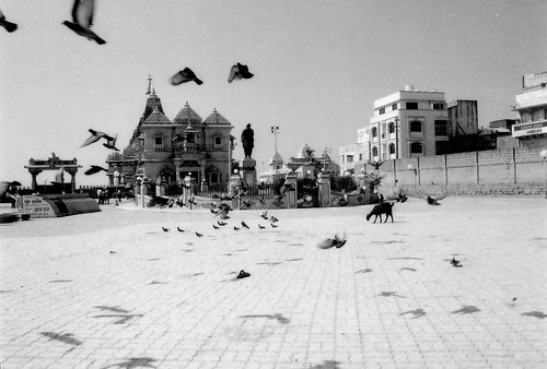 Shadows of flying birds at Somnath Temple