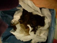 שיער אבוד (inbell) Tags: yuval יובל