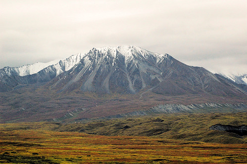 Alaska With Kids: Denali National Park