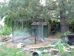 Chicken coop in progress