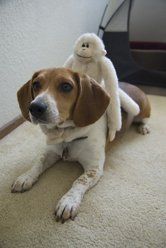 2008-06-07 Beagle Meetup and Monkey on Sallys Back-6