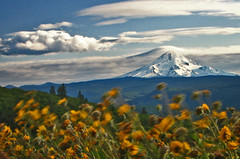 The answer, my friend, is blowin' in the wind (Misserion) Tags: oregon point wind columbia mthood gorge wildflowers mccall rowenacrest tommccallpreserve