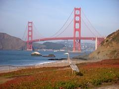 Baker Beach -- Great Blue Heron #3 (wanderingYew2 (thanks for 5M+ views!)) Tags: sanfrancisco california bridge bird beach heron goldengatebridge bakerbeach presidio us101 pacificcoasthighway californiahighway1 ca1 nationalscenicbyway allamericanroad unitedstateshighway101