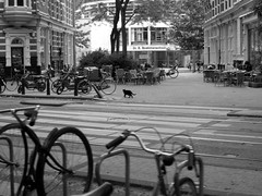 Amsterdam, June 2008 (milov) Tags: bw amsterdam animals cat zoom edited bicycles cropped roetersstraat plantagebuurt gx100 dreboekmanschool
