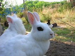 dscn6490 (HaukeH) Tags: bunny hasen freigehge kanienchen