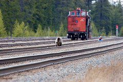 Hoovering the other side now (Buhler's World) Tags: world bear park canada cn train rockies death track wildlife grain canadian caboose national alberta banff grizzly cp killzone buhlers crayok
