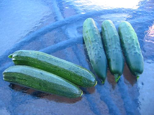 Zucchini and Cucumbers