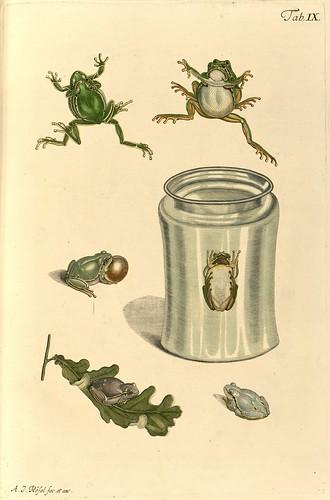 Historia naturalis ranarum nostratium 1758 c