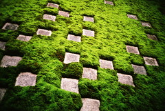 moss checkers (troutfactory) Tags: green film rock japan garden temple moss lomo lca lomography kyoto squares toycamera rangefinder tofukuji zen   analogue checkers superia400 kansai  intensity  rinzai