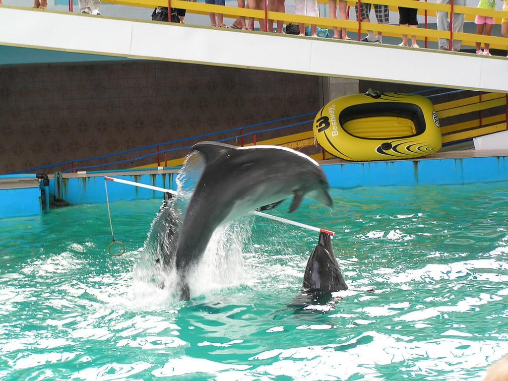 A wonderful place - a dolphinarium in Evpatoria