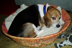 belle in basket