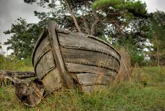 Left to rot (dans le grand bleu) Tags: tree rot boat log sweden baltic creativecommons gotland wreck scandinavia westcoast hdr clinker photomatix interestingness322 i500 lummelunda krusmyntagrden gotlandhdrafterphotoshop explore10sep08