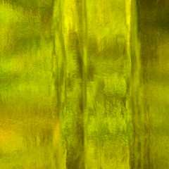 green with envy (WonkyBabbit) Tags: abstract macro green glass bottle organic oliveoil mundane yellowgreen lucini coldpress premiumselectvirginoliveoil inmykitichen