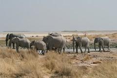 prova 692 (Danilus08) Tags: africa desert namibia etosha deserto himba namib namibiadanivale2008