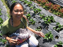 Baguio Strawberry Farm (Shaley_d) Tags: baguiocity strawberryfarm