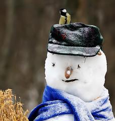Hyvää Joulua (mattisj) Tags: bird snowman greattit parusmajor lintu lumiukko talitiainen anawesomeshot