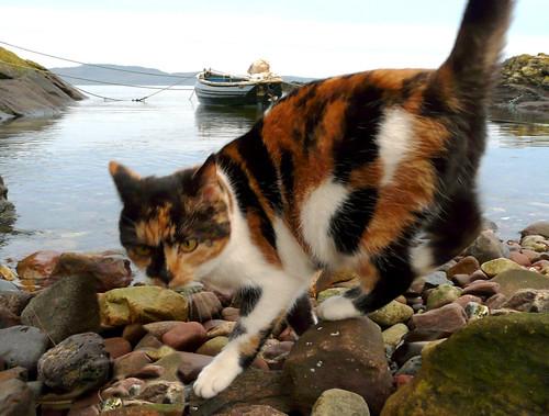 Cat by castle harbour 25Dec08